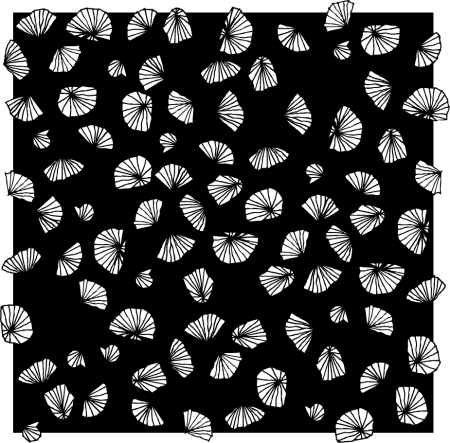 shells andfans